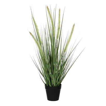 dogtail-hierba-purpura-pvc