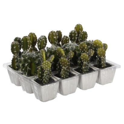 cactus-pvc-14cm-surtido-3
