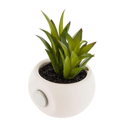 mini-plantas-decorativas-con-iman-modelos-surtidos-6cm