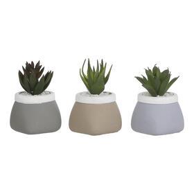 ultunidades-planta-cactus-en-macetero